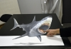 anamorph_shark_35