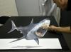 anamorph_shark_37