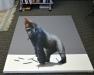 pijet_anam_gorilla1